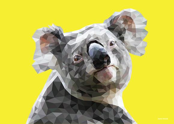 Koala   Sophie Gibcus