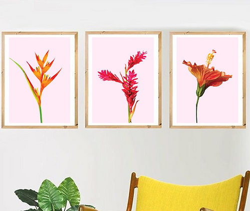 Tropical Flowers - Set of 3 | Sophie Gibcus
