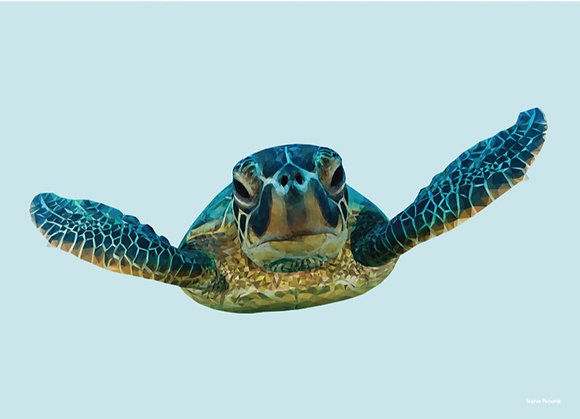 Turtle | Sophie Gibcus