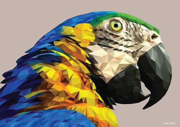 Parrot | Sophie Gibcus