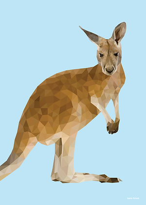 Kangaroo | Sophie Gibcus