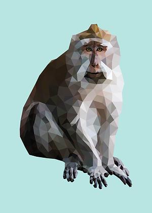 Monkey | Sophie Gibcus