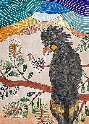 'Yolanda the Yellow Tailed Black Cockatoo' | Aggie Dolan
