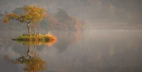 AUTUMN TREE, RYDAL