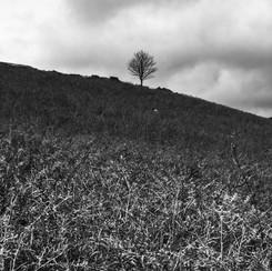 AUTUMN TREE MOSEDALE MONO