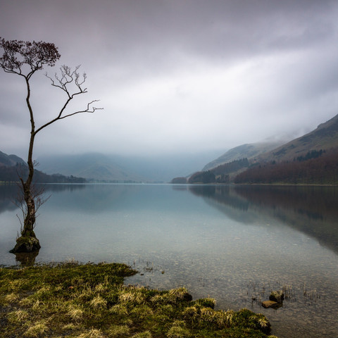 BUTTERMERE TREE WINTER
