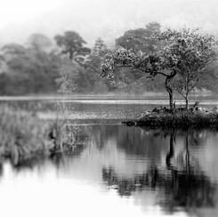 RYDAL TREE MONO