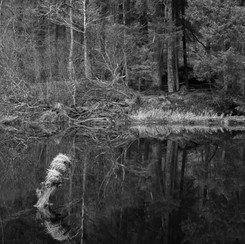RIVER REFLECTIONS ii