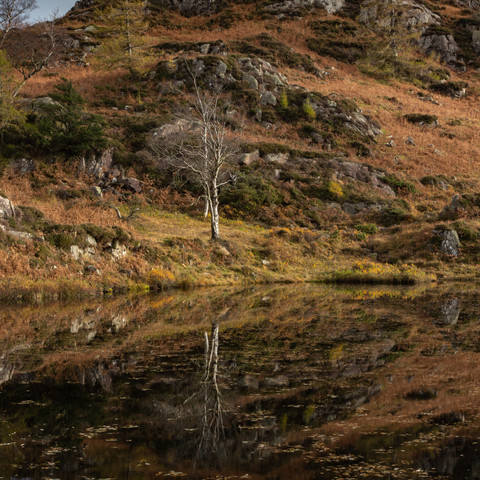 HOLME FELL REFLECTION
