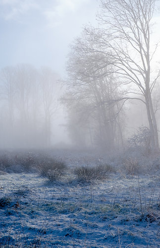 A WINTERS MORNING