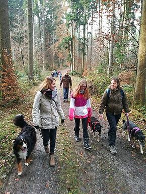 Hundetraining mobil unterwegs