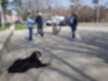 Mobile Hundschule im Zürcher Oberand