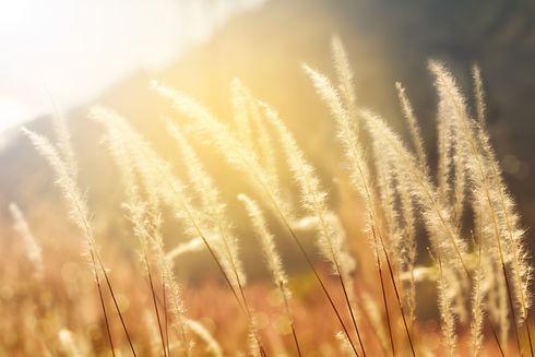 APAMAYA, Muriel Raffin, Coach de Vie, dans la région de Nyon (Vaud), vous aide à transformer vos grandes ruptures, sortir de l'impasse et reprendre votre pouvoir : défi professionnel, ornière relationnelle, blocage identitaire, difficulté à faire un choix, maladie, fin de vie… Grâce à la numérologie existentielle