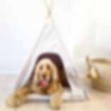 Burrow-pet-bed-teepee.png