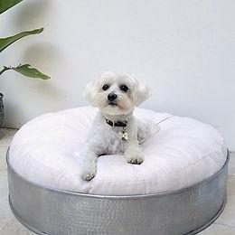 Burrow, Teepee, Dog Bed.jpg