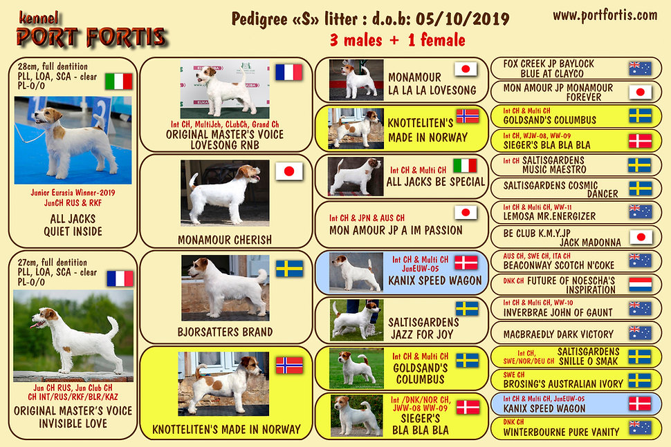 S litter pedigree.jpg