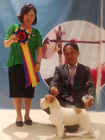 7-8.09.2019 Philippine Canine Club Inc. 6All Breed Dog Shows