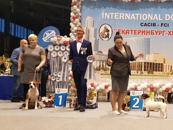 "INTERNATIONAL DOG SHOW CACIB ""Екатеринбург-XXI век"" 2019"