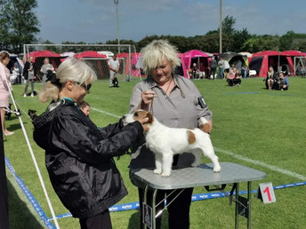 12-13/06/2021 Danish Terrier Clubs show in Fredericia, Denmark
