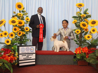 17.08.2019.Philippine Canine Club Inc. 191st & 192nd FCI All Breed Championship Dog Shows