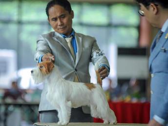 14-15.09.2019 All Breed Dog Shows of Philippine Bullmastiff Federation Inc. (Philippine)