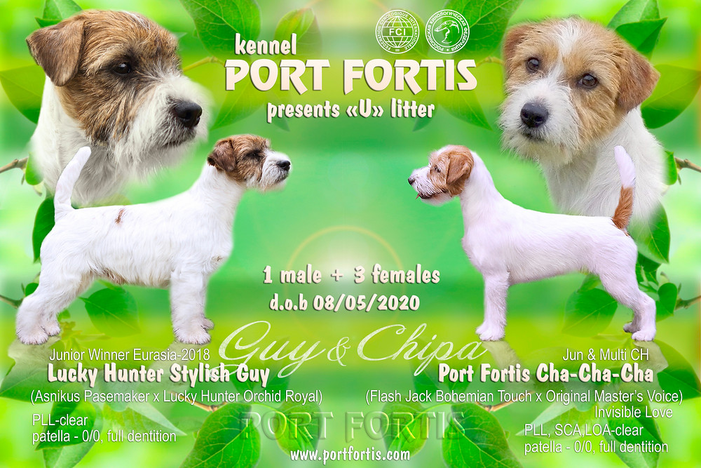PORT FORTIS Litter U