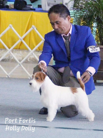 🔥🔥2019 2nd TOP JACK RUSSELL TERRIER🔥🔥