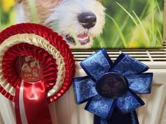 04.07.2021 Spezialausstellung für Terrier (Germany)