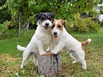 Два брата-акробата. Осенняя фотосессия