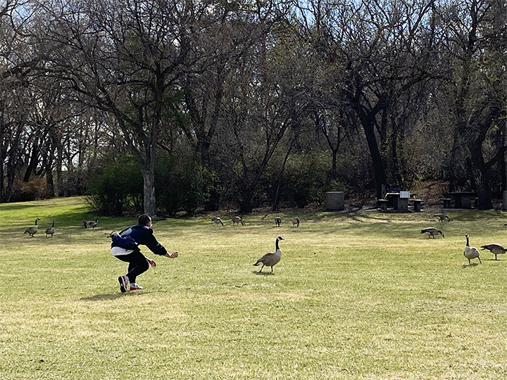 Goose_Feeding.jpg