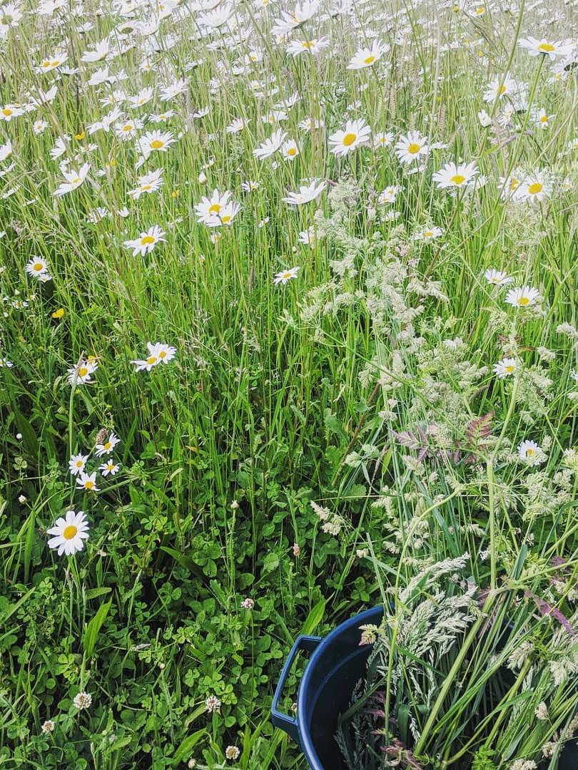 PYO Meadow Flowers