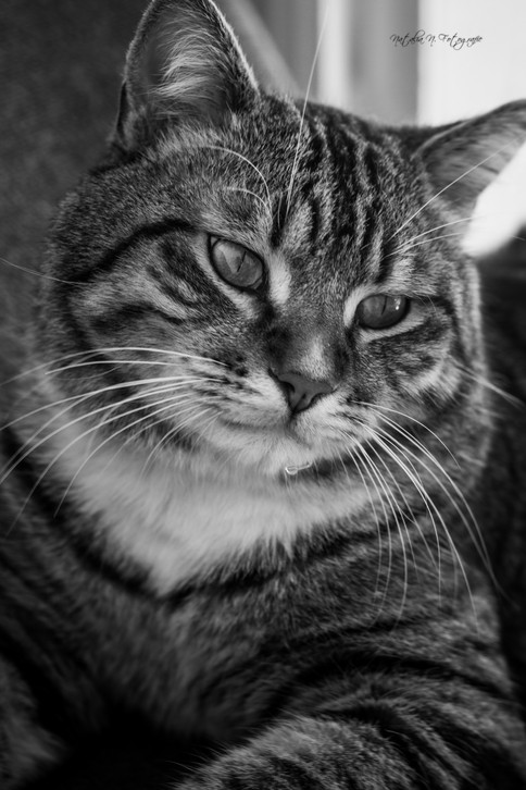 Chat-ge comme une image