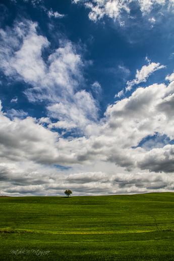 L'arbre et le ciel