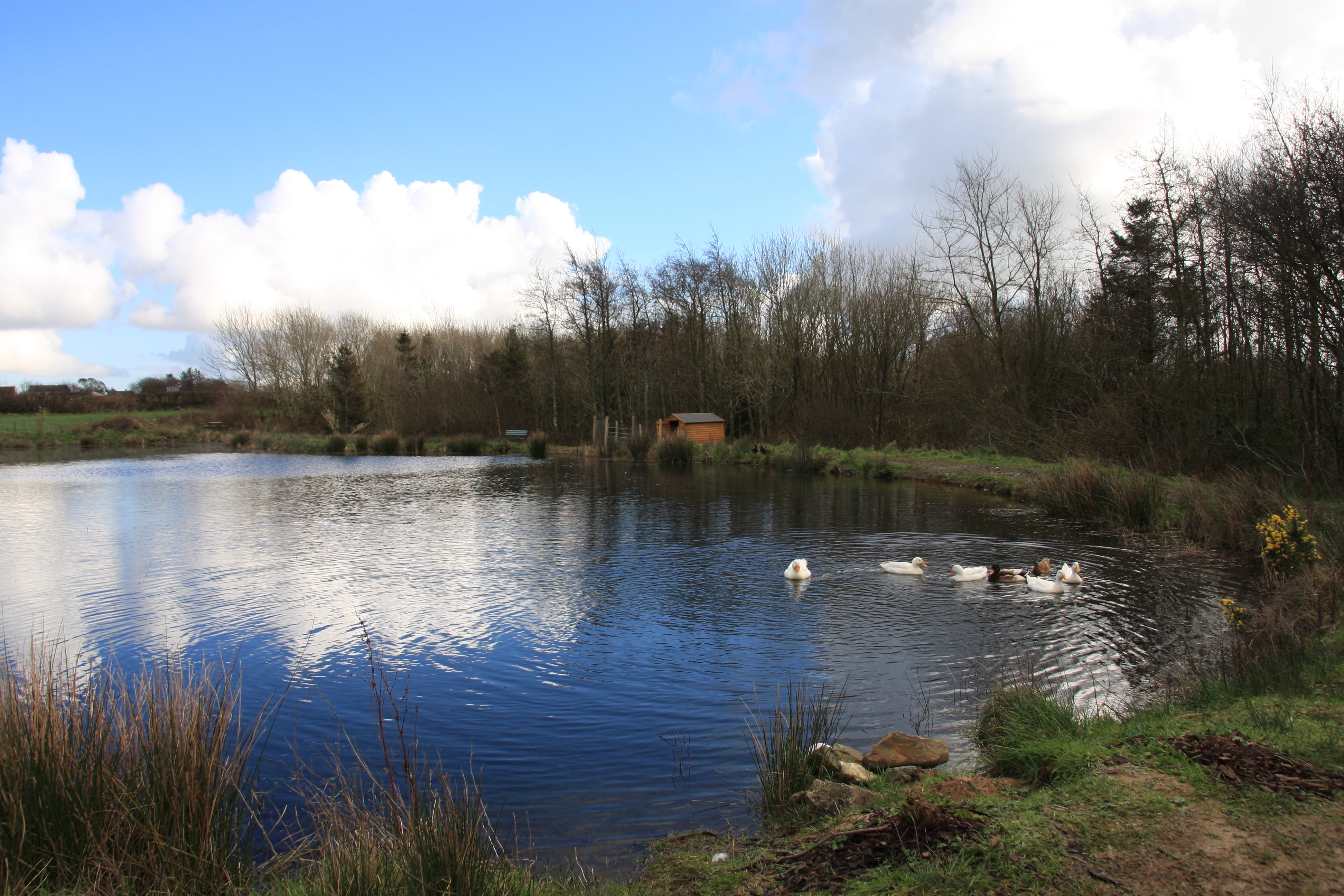 Carp lake, Bwlford Pembrokeshire