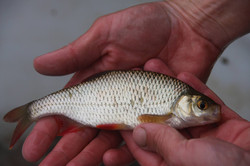 Rudd Bwlford Fishery