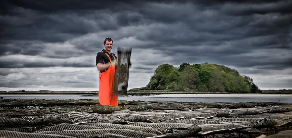 Irish Oyster farmer