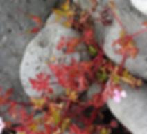 Revised Stone flower.jpg