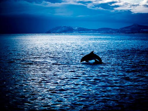 Dalkey Dolphins