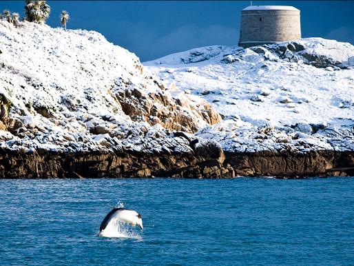 Dalkey Island Dolphins