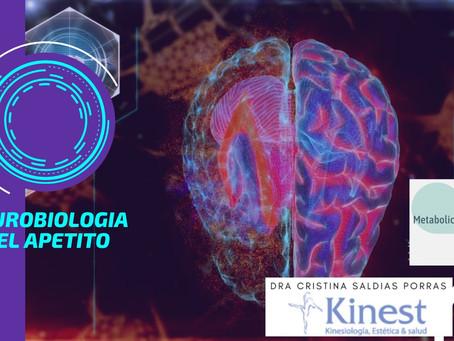 Neurobiología del apetito