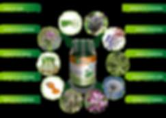 Regulador D-Tox para Web_Mesa de trabajo