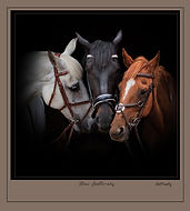 thumbnail_Framed The three stable mates.