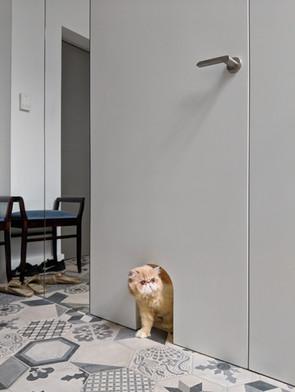 Interior-T przejście dla kota