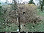 Bird Count 1.JPG