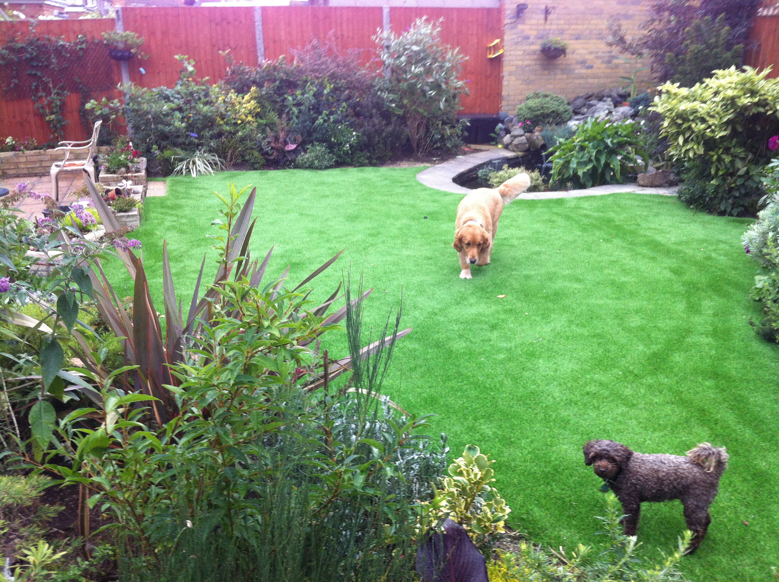 Artificial grass and Koi pond