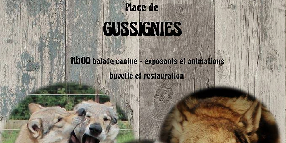 Fête du chien-loup et du chien nordique à Gussignies