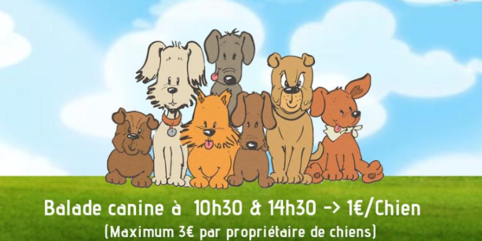 Journée du chien chez Azoo