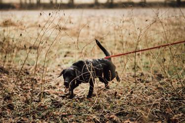 HundeschuleFatimaTakruri15.jpg
