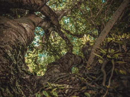 Osanyin - A Essência e os Segredos da Vida na Floresta