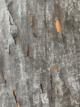 Tissue + Chalk (close up)
